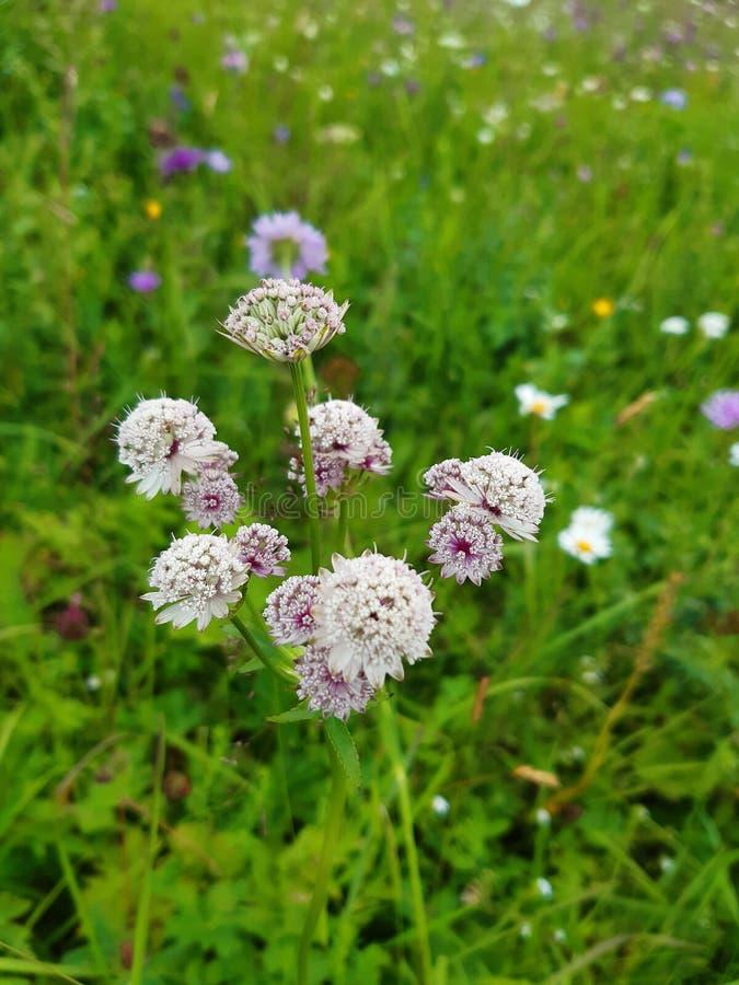 wildflower fotografie stock libere da diritti