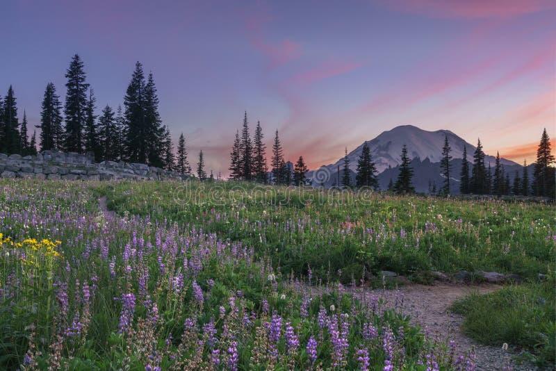 Wildflower che fiorisce nel lago Tipsoo, Mt rainier fotografia stock