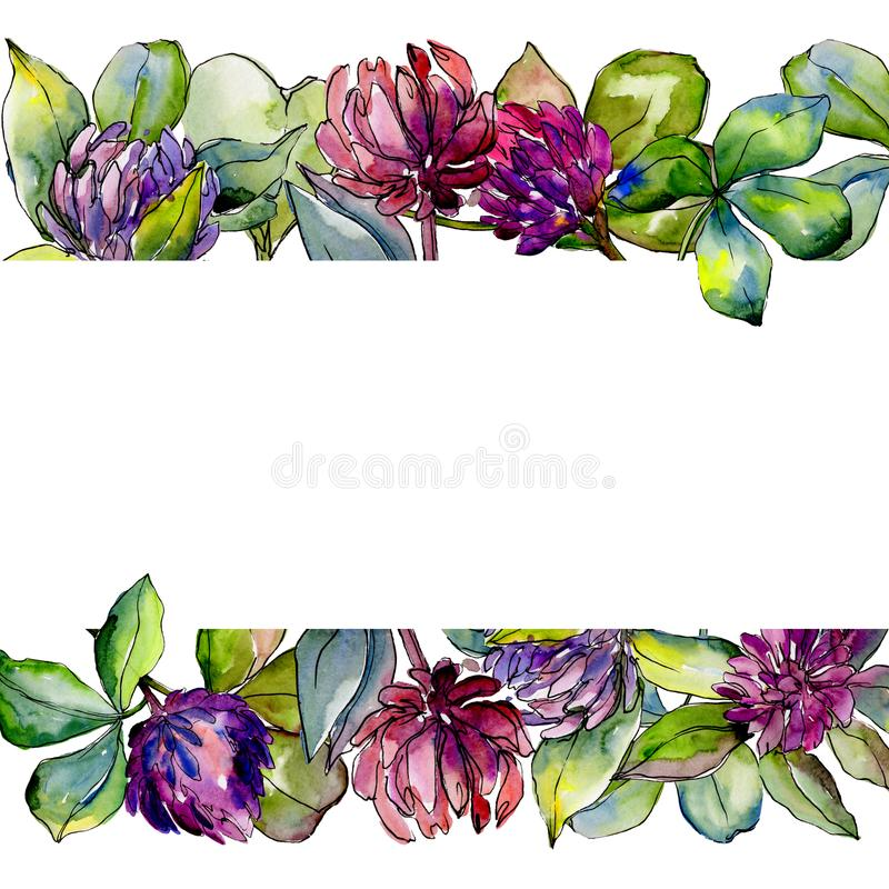 Wildflower clover flower in a watercolor style frame. royalty free illustration