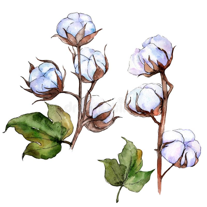 Wildflower cotton flower in a watercolor style isolated. stock illustration