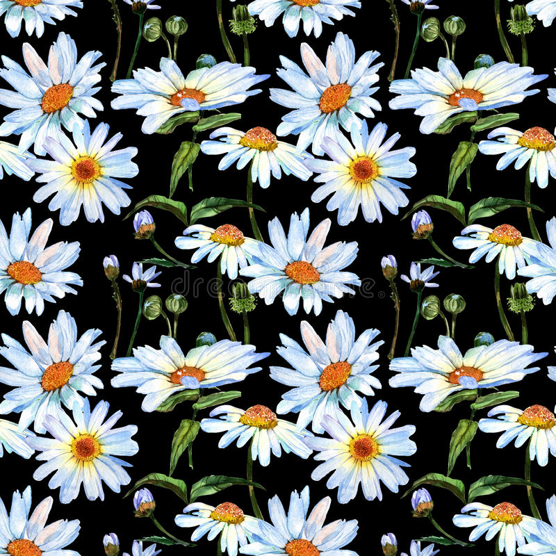 Wildflower daisy flower pattern in a watercolor style. royalty free stock photos