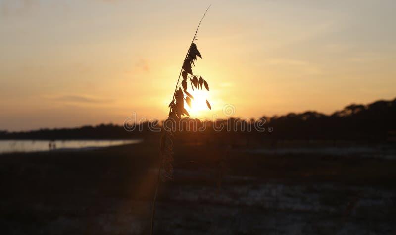 Wildflower de la playa en la puesta del sol fotografía de archivo