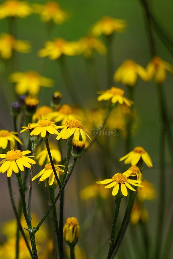Wildflower de la primavera fotografía de archivo