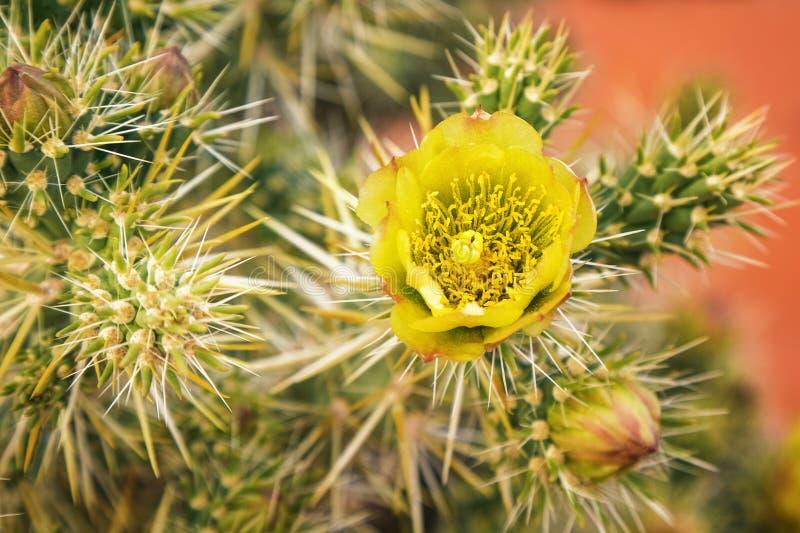 Wildflower del deserto immagini stock
