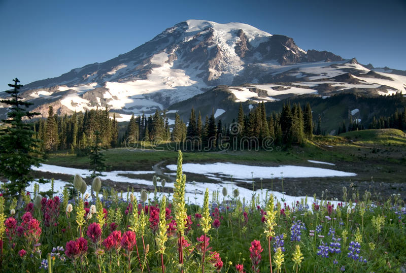 Wildflower del monte Rainier fotografia stock libera da diritti