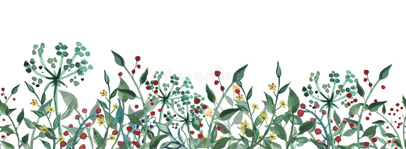 Wildflower dell'acquerello, erbe, foglia Reticolo senza giunte Ruota dentata royalty illustrazione gratis