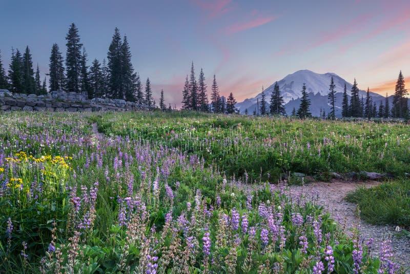 Wildflower, der am Tipsoo See, Mt blüht regnerischer stockbilder