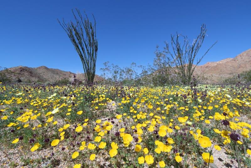 Wildflower en Joshua Tree National Park foto de archivo libre de regalías