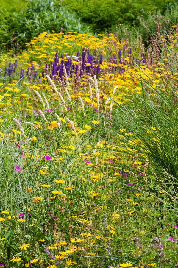 Wildflower field garden summer spring colourful plants outdoors blooming flowers royalty free stock photos