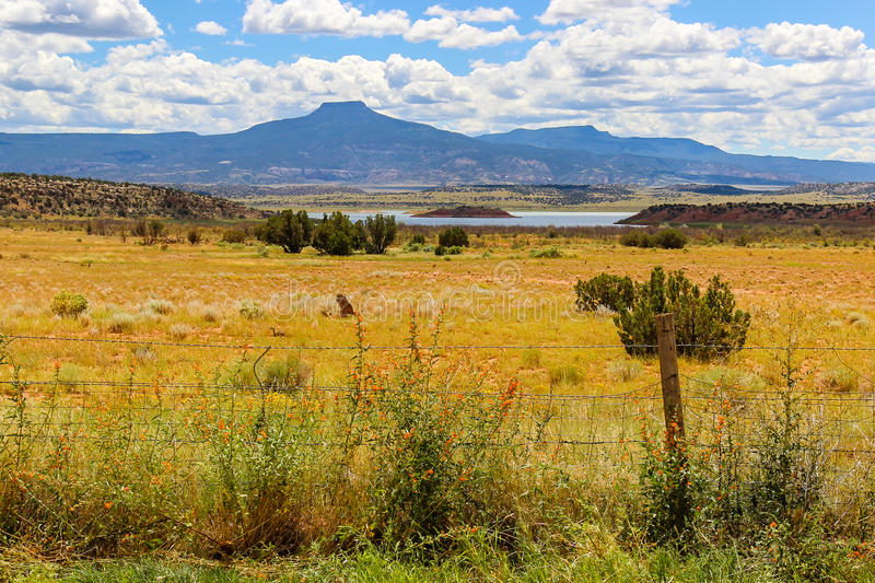 Wildflower Field Near the Lake in Colorado. Golden wildflowers in the meadow near the lake at the foothills of the Rocky Mountains, barbed wire fence in the royalty free stock images
