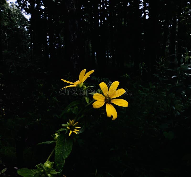 Wildflower giallo fotografia stock libera da diritti