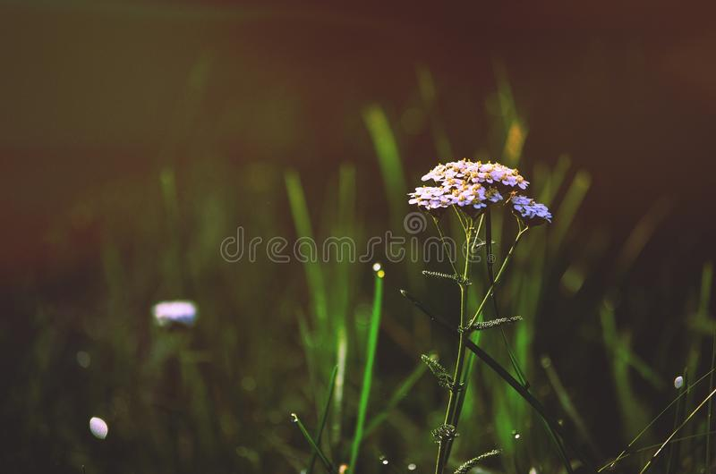 Wildflower In Green Grass Free Public Domain Cc0 Image