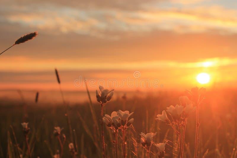 Wildflower grupa w wschodzie słońca obraz royalty free