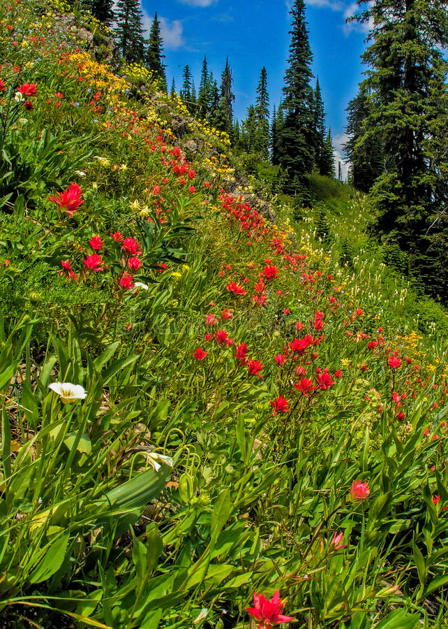 Wildflower Heaven royalty free stock image