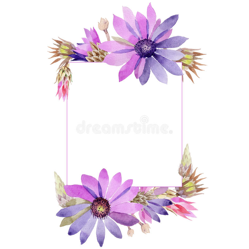 Wildflower immortelle flower frame in a watercolor style. Full name of the plant: immortelle. Aquarelle wild flower for background, texture, wrapper pattern stock illustration