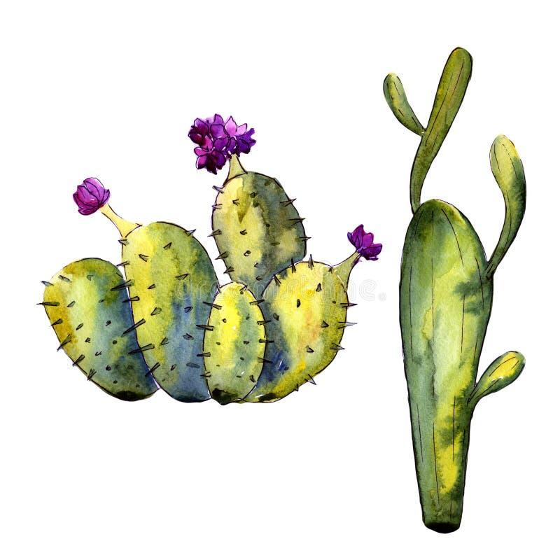 Download Wildflower Kaktus W Akwarela Stylu Odizolowywającym Ilustracji - Ilustracja złożonej z okwitnięcie, dekoracje: 106918040