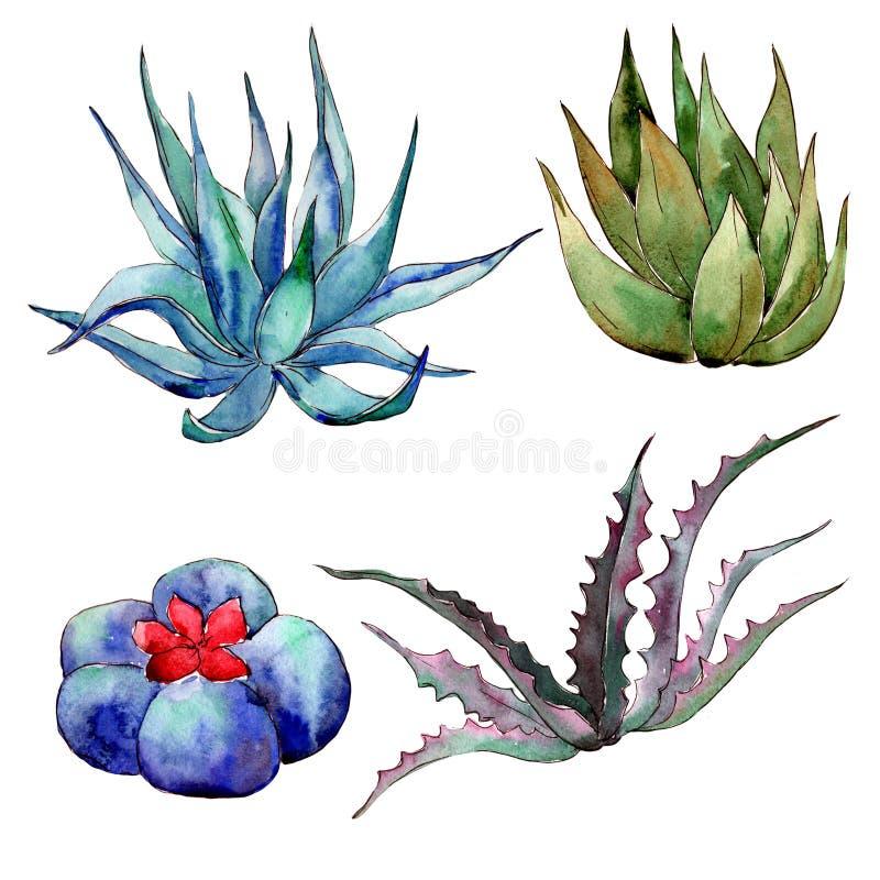 Download Wildflower Kaktus W Akwarela Stylu Odizolowywającym Ilustracji - Ilustracja złożonej z greenbacks, okwitnięcie: 106924327