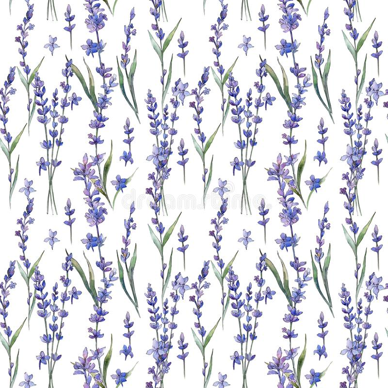 Wildflower lavander flower pattern in a watercolor style. Full name of the plant: lavander. Aquarelle wild flower for background, texture, wrapper pattern vector illustration