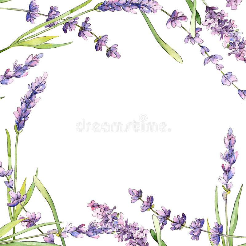 Wildflower lavender flower frame in a watercolor style. Full name of the plant: lavender. Aquarelle wild flower for background, texture, wrapper pattern, frame vector illustration