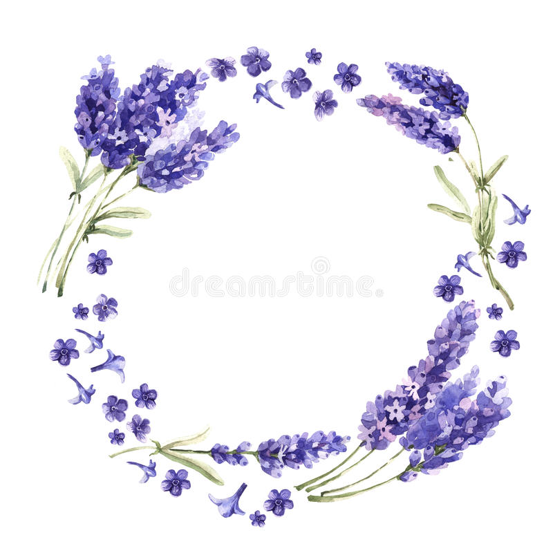 Wildflower lavender flower wreath in a watercolor style isolated. Full name of the plant: lavender. Aquarelle wild flower for background, texture, wrapper royalty free illustration