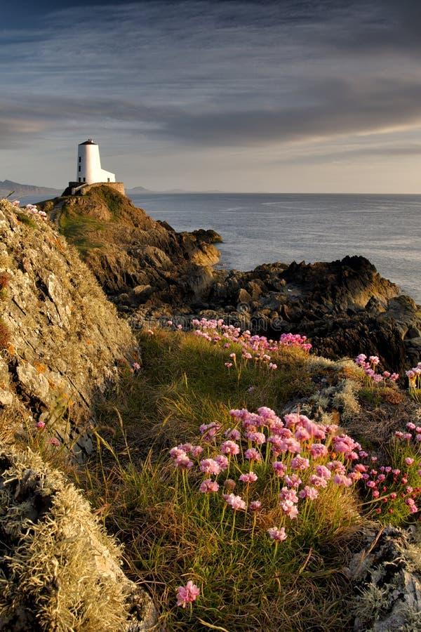 Free Wildflower Lighthouse, Ynys Llanddwyn, Anglesey Stock Photos - 54719073