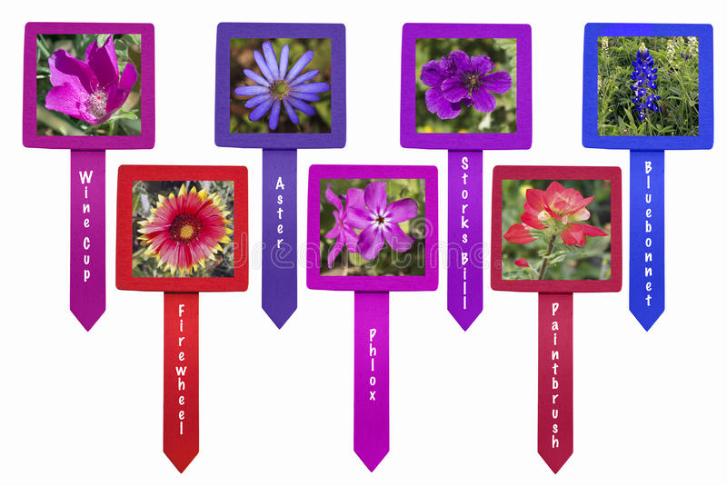 Wildflower markers isolate. Stork's bill, wine cup, firewheel, aster Indian Paintbrush, Bluebonnets Texas Wildflowers on markers isolated on white background royalty free stock photo