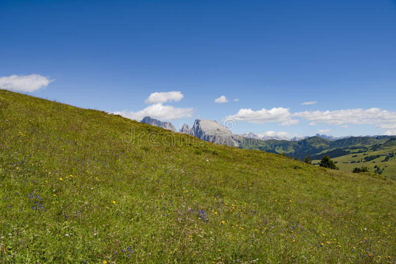 Wildflower meadow in Alps royalty free stock photos