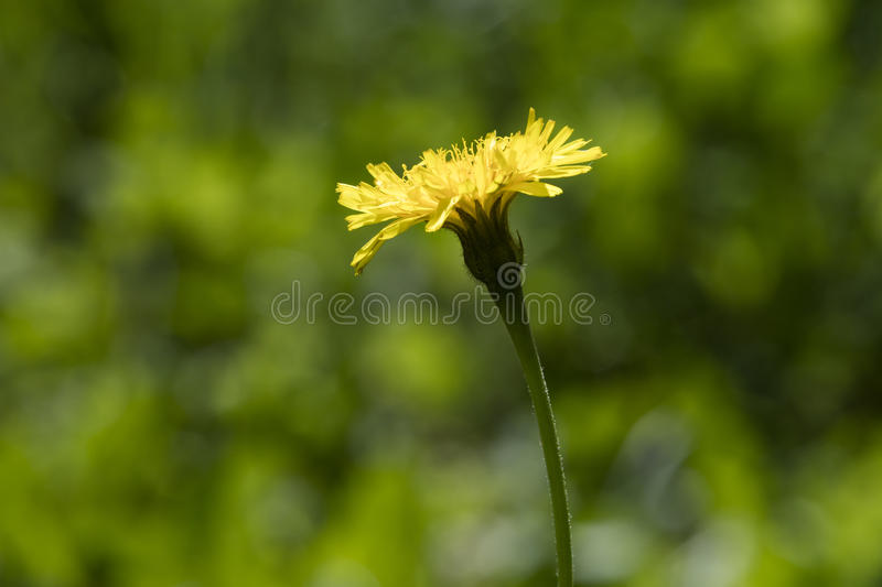 Wildflower in the meadow stock photos