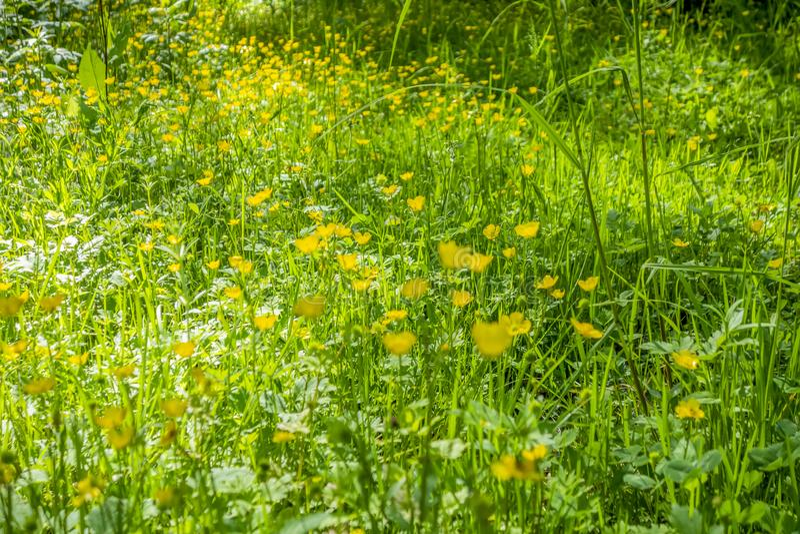 Wildflower meadow. Full frame sunny illuminated wildflower meadow closeup stock photo