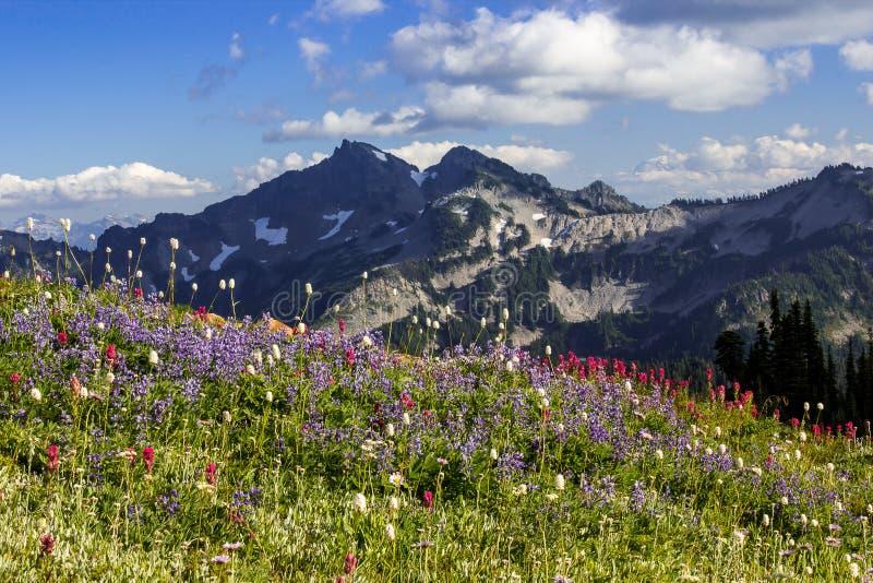 Wildflower Meadows and Tatoosh Range. Blooming wildflowers meadows and the Tatoosh Range in Mt.Rainier National Park in Washington royalty free stock photos