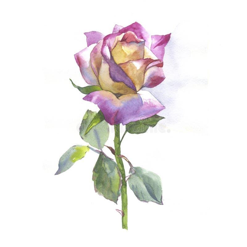 Wildflower nam bloem in een geïsoleerde waterverfstijl toe royalty-vrije illustratie