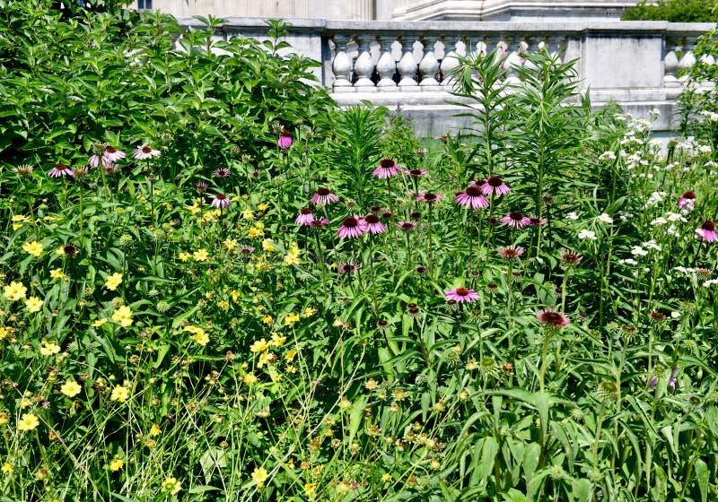 Wildflower ogr?d zdjęcia royalty free