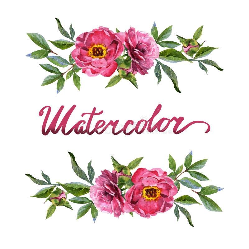 Wildflower peoni kwiatu rama w akwarela stylu odizolowywającym royalty ilustracja