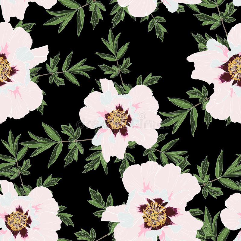 Wildflower peony flower seamless patternwith leaves isolated on black background. Full name of the plant: peony vector illustration