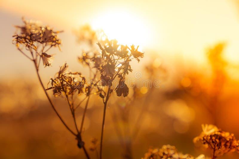 Wildflower plants on autumn meadow stock image
