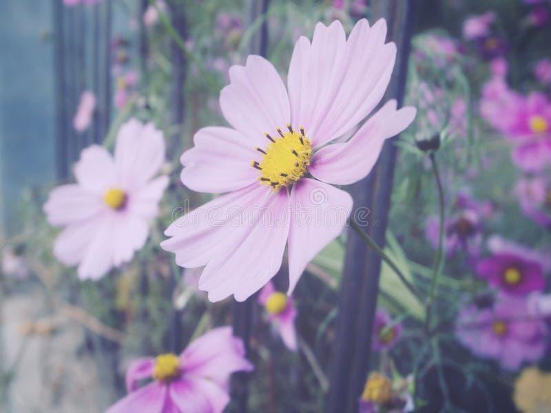 Wildflower royalty free stock image