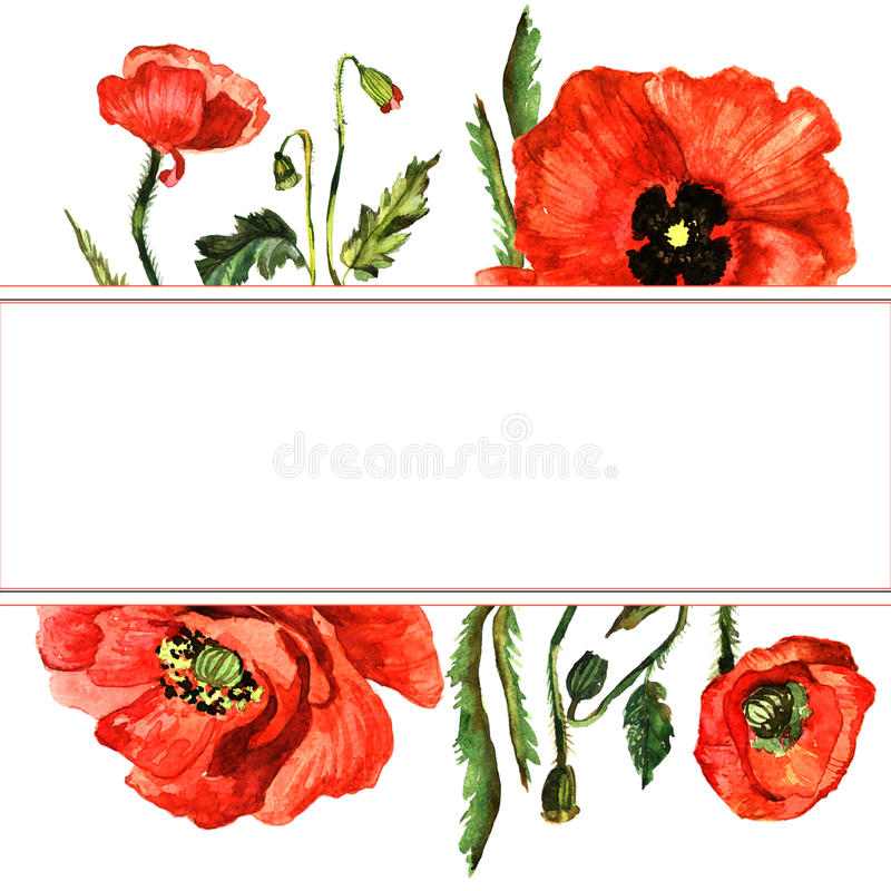 Wildflower poppy flower frame in a watercolor style isolated. Full name of the plant: poppy, papaver, opium. Aquarelle wild flower for background, texture stock illustration
