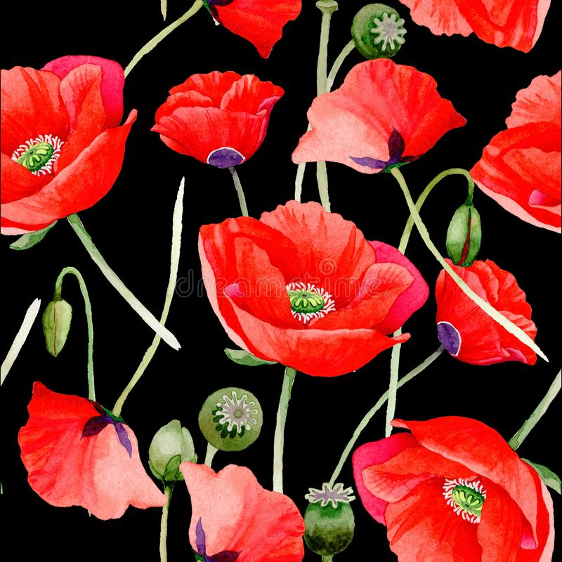 Wildflower poppy flower pattern in a watercolor style. royalty free stock photos