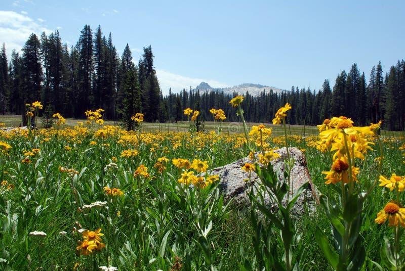 Wildflower prairie stock photos