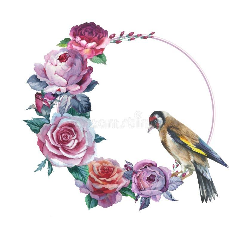 Wildflower róży kwiatu wianek w akwarela stylu odizolowywającym royalty ilustracja