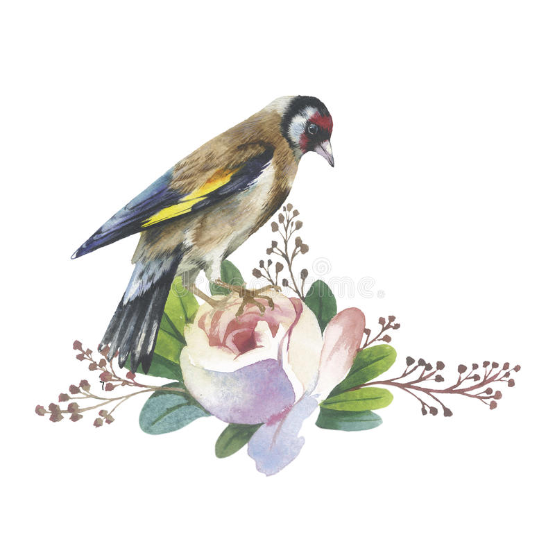 Wildflower rose flower and bird in a watercolor style isolated. vector illustration