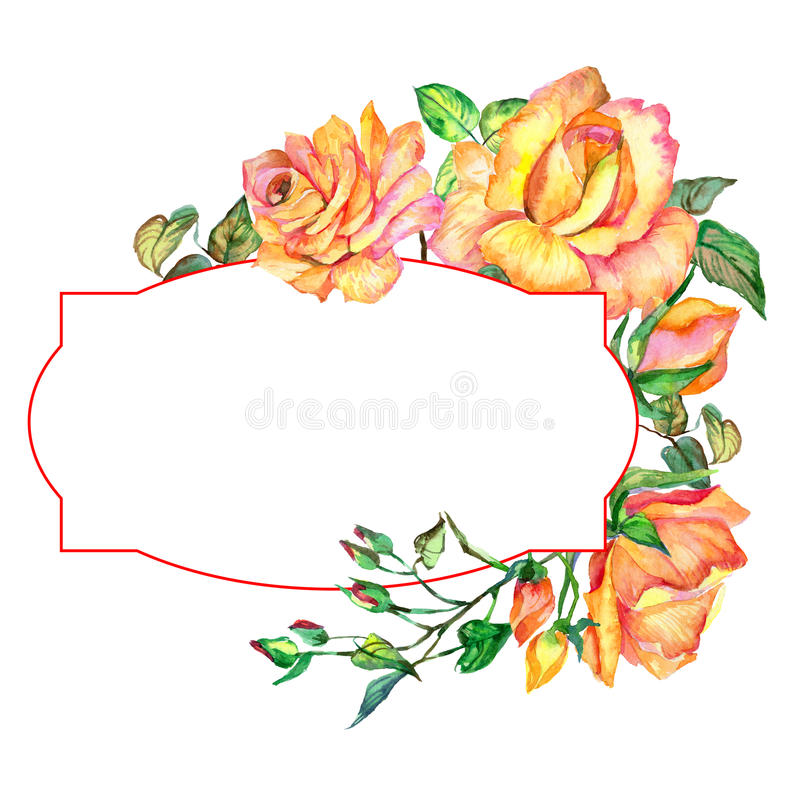 Wildflower rose flower frame in a watercolor style. Full name of the plant: rose. Aquarelle wild flower for background, texture, wrapper pattern, frame or stock illustration