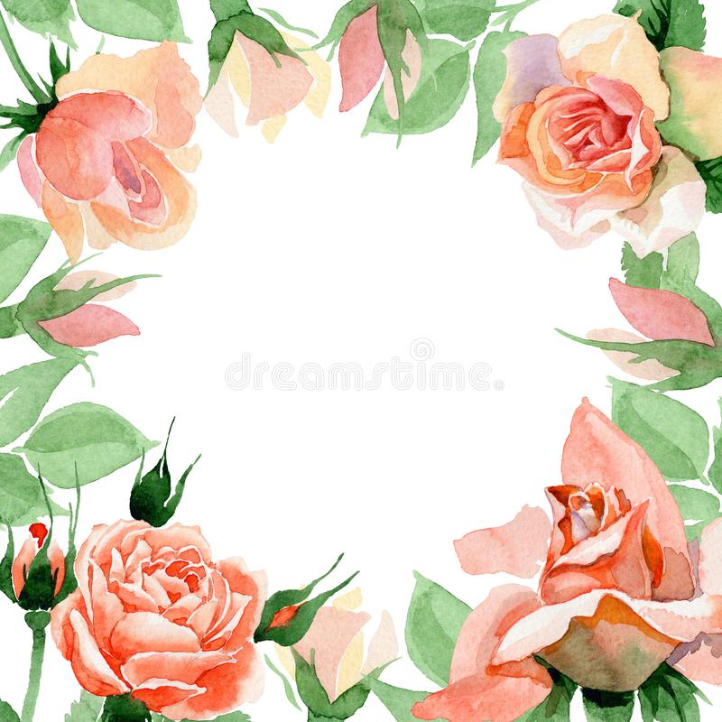 Wildflower rose flower frame in a watercolor style. Full name of the plant: rore, rosa, hulthemia. Aquarelle wild flower for background, texture, wrapper stock illustration