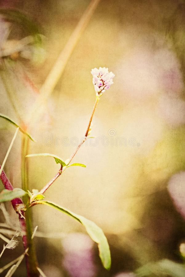 Wildflower simple de tige de fond texturisé sur le Pawnee image stock