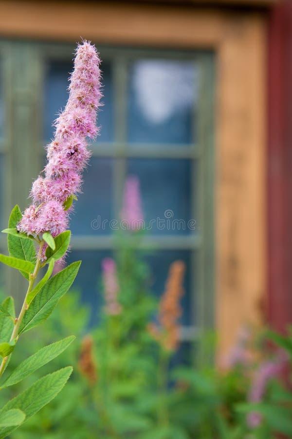 Wildflower sueco en Skansen fotografía de archivo
