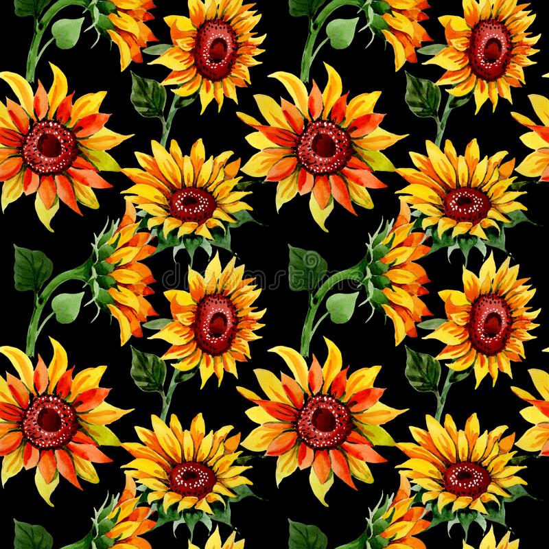 Wildflower sunflower flower pattern in a watercolor style. Full name of the plant: sunflower. Aquarelle wild flower for background, texture, wrapper pattern stock illustration