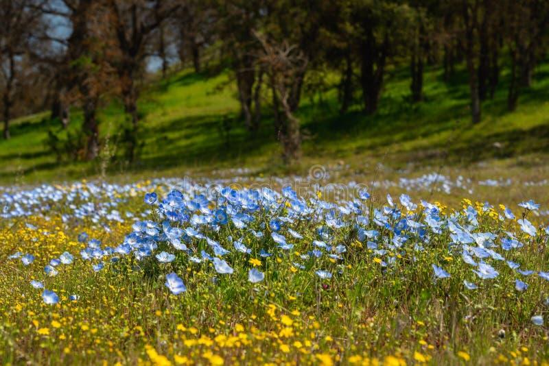 Wildflower super bloei stock afbeelding