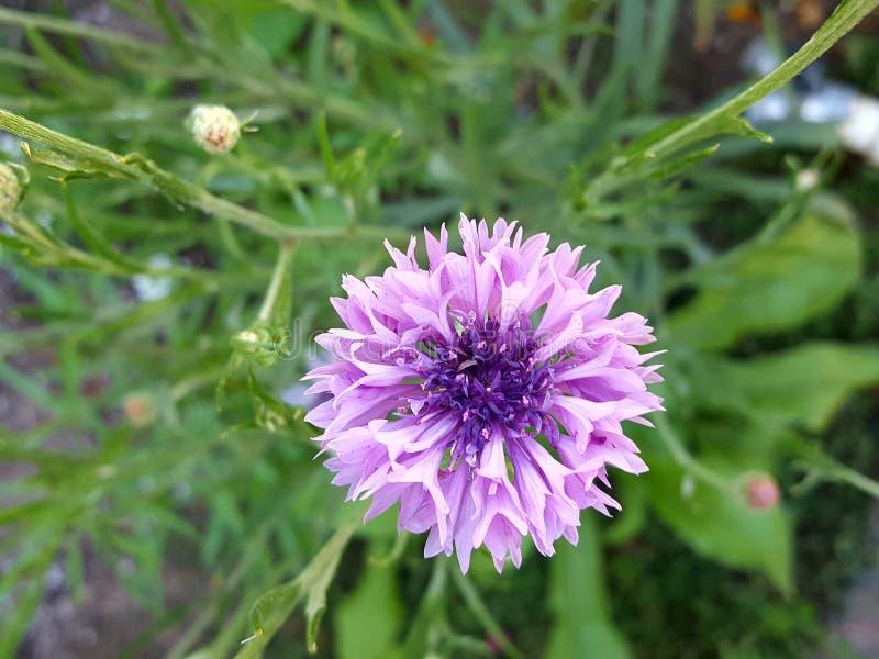 Wildflower surpreendente fotografia de stock