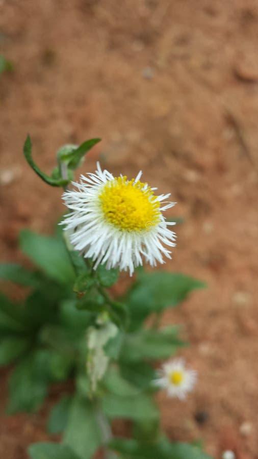 Wildflower stock photography