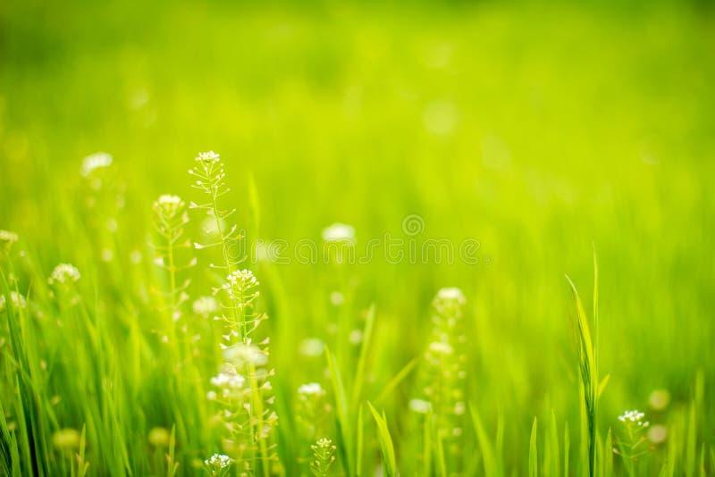 Wildflowerd ed erba immagine stock libera da diritti